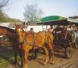 Ciechocinek-przejażdżka tramwajem konnym